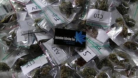 7 Week Old RQS Royal Creamatic - Autoflowering Cannabis Plant Update