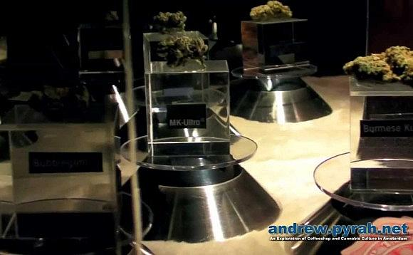 The 2013 Cannabis Cup Amsterdam Expo Part 2
