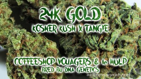 24K GOLD Voyagers Coffeeshop & Coffeeshop 1e Hulp
