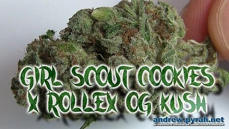 COOKIES KUSH Barney's Coffeeshop Cannabis Cup 2014 Entry - Amsterdam Weed Review