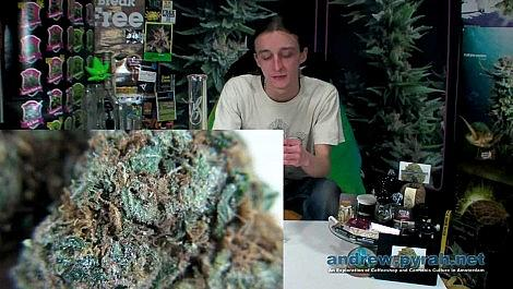 CRITICAL KUSH 't Keteltje Coffeeshop Amsterdam Weed Review and Bud Closeups