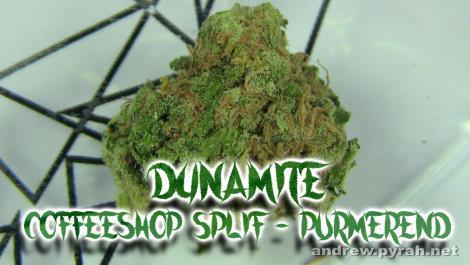 DYNAMITE Splif Coffeeshop in Purmerend - Amsterdam Weed Review 2015