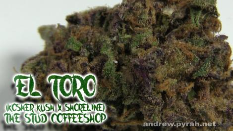 EL TORO SHORELINE X KOSHER KUSH The Stud Coffeeshop - Amsterdam Weed Review 2015