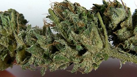 FLOWERBOMB KUSH 2nd Place Winner Cannabis Cup 2013 The Green House Coffeeshop - Amsterdam Weed Review 2014