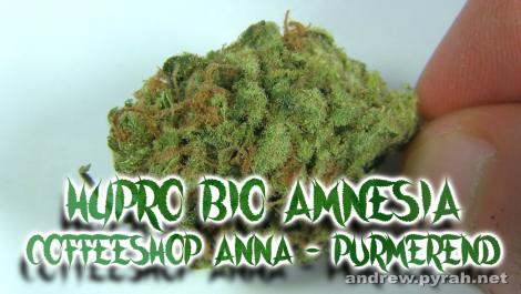 HYPRO BIO AMNESIA Coffeeshop Anna in Purmerend - Amsterdam Weed Review 2015