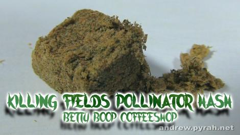 KILLING FIELDS POLLINATOR HASH Betty Boop Coffeeshop / Amsterdam Weed Review 2015