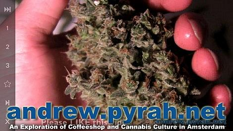 Royal Queen Seeds SWEET SKUNK AUTOMATIC Harvest & Trimming - Amsterdam Weed Review 2014