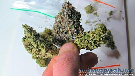 Purple Weed, Orange Buds & Green Ganja - Cannabis Colours