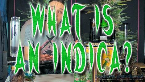 2 WHAT IS AN INDICA? #CannabisQuestions