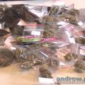 The Highlife (Cannabis) Cup 2012 - The Judges Pack Weed and Hash Entries Part 1