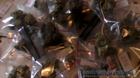The Highlife (Cannabis) Cup 2012 - The Judges Pack Weed and Hash Entries Part 2
