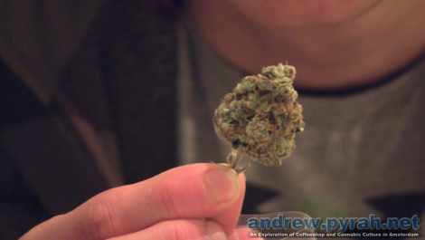 The Highlife (Cannabis) Cup 2012 - Judging the Weed Part 1