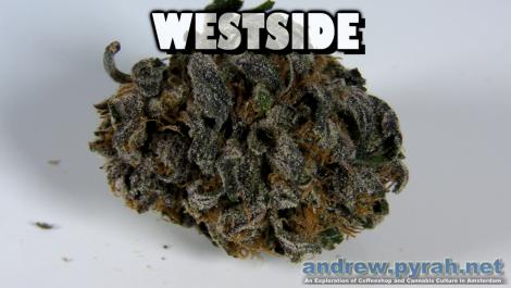 WESTSIDE Voyagers Coffeeshop Allstar Genetics - Amsterdam Weed Review