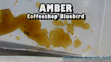 AMBER HASH Coffeeshop Bluebird - Amsterdam Weed Review